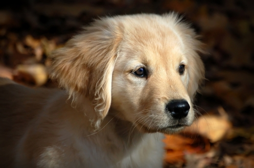 Sandy the pup